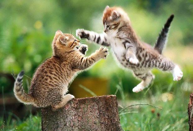 Les chats comme on les aime