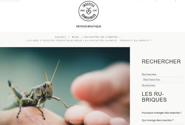 Elevage d'insectes comestibles