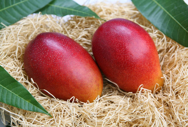 La mangue un fruit exotique d'exception