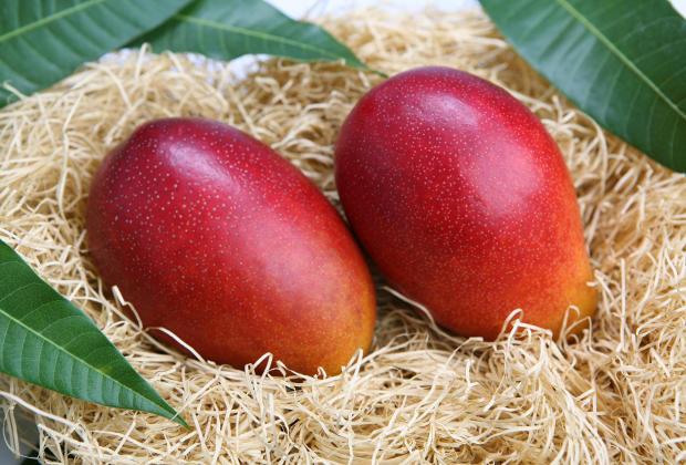 La mangue un fruit exotique d'exception