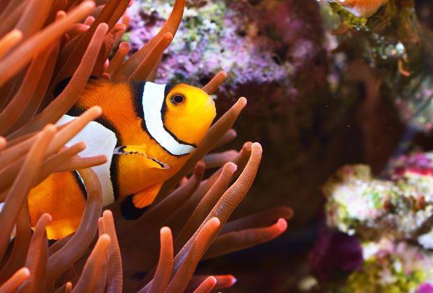 MarineLife Aquariophilie d'eau de mer