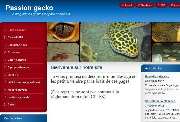 Passion Gecko