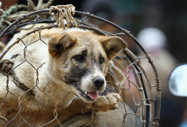 Taiwan interdit la consommation de viande de chien et chat